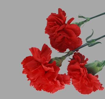 Возложить цветы